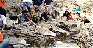 BBCBrasil.com | Reporter BBC | Paleontólogos acham ossada de ...