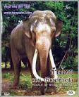 VCD GM89 สารคดีสัตว์โลก ช้างไทย ตอน ปริศนาช้างป่า (บรรจุซอง) #4798609