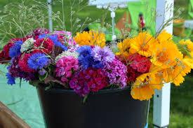 Flowers Winchester - agriculture wright locke farm winchester farm