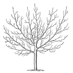 The Graphics Fairy LLC*: Vintage Clip Art - Winter Trees