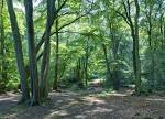 File:Epping Forest Centenary Walk 2 - Sept 2008.jpg - Wikimedia ...