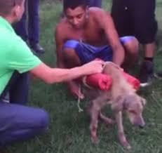 vídeo Gangue de jovens explode um cão e recebe pena branda em ...