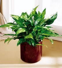indoor plants low light cozy bliss 11 low maintenance indoor