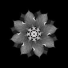 \u0026#39;Meditation on a Spring Garden #3\u0026#39; - Judith Lyons - judith-lyons-meditation-on-a-spring-garden-3