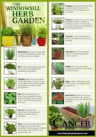 14 cancer fighting plants for your indoor herb garden indoor