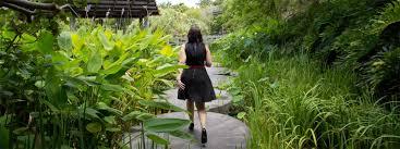 Brisbane City Botanic Gardens by Roma Street Parkland Events Brisbane City Council