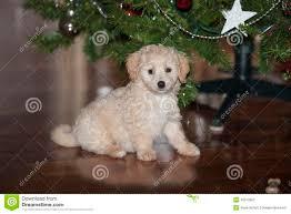 dog under christmas tree stock photos image 6861533