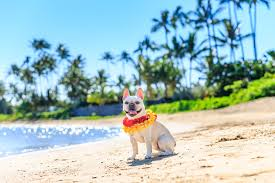 pets in the city oahu hawaii u2013 oahu dog boarding and grooming services