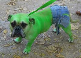 41 best pet costumes images on pinterest pet costumes costumes
