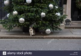 Simons Cat Christmas Tree by Downing Street Cat Stock Photos U0026 Downing Street Cat Stock Images