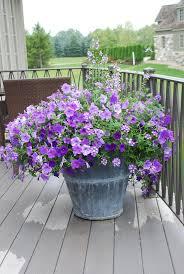 57 best pastel flowers in pots images on pinterest pastel