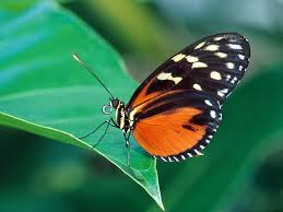 Image of a butterfly on a leaf