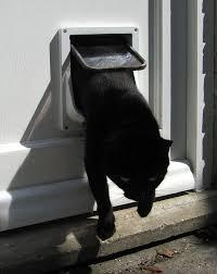catflap in glass door pet door howlingpixel