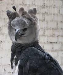 طائر الأساطير اليونانية images?q=tbn:ANd9GcR