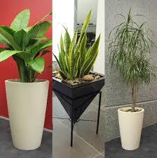 Η καλλιέργεια των φυτών εσωτερικού χώρου το χειμώνα Images?q=tbn:ANd9GcRQ8L4kpvp4Nsk3f3nipbKQaeiKF1uiSYuVWMWHadfjCzao6IfyOA