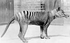 Animales Extintos Images?q=tbn:ANd9GcRQDk76dAq2iBCIrV6l7Hfn1sMxiC7JObE0HS1udWPKwbHJxwI&t=1&usg=__U7FQxxWkYM30jVNu2cujmQnz4vg=