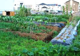 how to plan a small garden layout archives u2013 modern garden