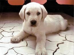 ¿Interesado en saber cuánto cuesta adiestrar a un perro?