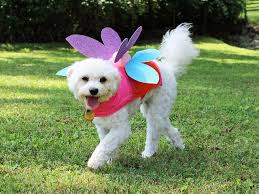 dress your pet as a fairy for halloween hgtv