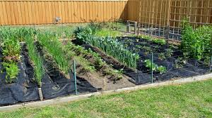 spring vegetable gardening in april with crazy texas weather youtube