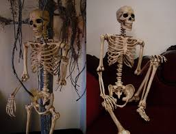 Halloween Skeleton Props by Shipwreck Productions Inc Catalog Props