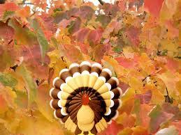 free thanksgiving screen savers turkey wallpapers free group 69