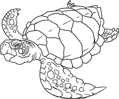unique ocean animal coloring pages best colori 5523 unknown