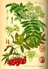 arbuste , plantes de nos jardin commestible .edible bush , smalltrees , plants Images?q=tbn:ANd9GcRSwG45ePPOzIuzrLnN5bNeFKU0L8yEHE-7sTst7V5PJ2wmCak&t=1&usg=__Dudsbl3uM1nriscWQXyGNxmZBsg=