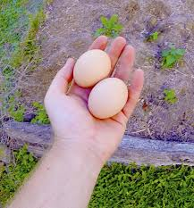 Manure For Vegetable Garden by Whole Eggs As Fertilizer Information About Raw Egg Fertilizer