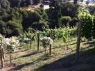 Planning Your Backyard Vineyard