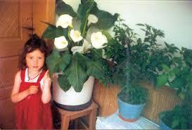 Vasilica Diaconu, loc. Orlești-Silea, jud. Vâlcea. Dragă redacție, Doresc să-i mulțumesc și pe această cale soacrei mele care mi-a insuflat dragostea pentru ... - PLANTELE-MELE-Vasilica-Diaconu-1