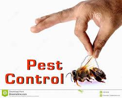 cute pest control kitchener design best kitchen gallery image