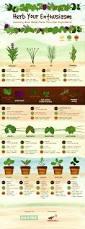herb gardens 101 a field guide