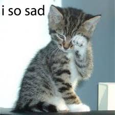الصرع عند القطط اعراضه وعلاجه +فيديو Images?q=tbn:ANd9GcRV7LaLapKzRLn-EQdCv_oWvSTq0-hWDK3FfoVkfX1Tv0joh1RKPw