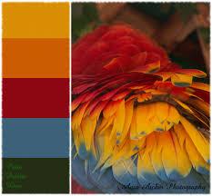 Color Swatches Paint by Color Palette Love Parrot Color Inspiration Color Combos And
