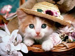 اجمل صور قطط في العالم Images?q=tbn:ANd9GcRW1CYZhal_9wZXRsWeS1ezolxGQGqQ1hKrGg7BeOtgNNtpB9TK