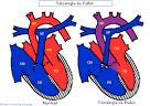 10% des <b>cardiopathies</b>