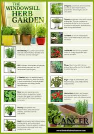 14 cancer fighting plants for your indoor herb garden
