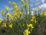 La faune et la flore - Ambrussum