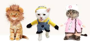 Kitten Costumes Halloween 14 Cat Costumes Halloween 2016 Hilarious Costumes Cats