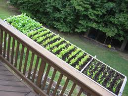 How To Keep Deer Out Of Vegetable Garden by Cool Container Vegetable Gardens University Of Maryland Extension