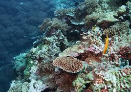 اجمل اشكال المرجان2013 -اجمل الصور