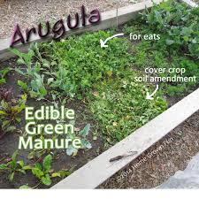 Manure For Vegetable Garden by Cover Crops For Gardens The Gardens