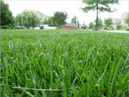 Second Nature Landscaping by Second Nature Landscaping U0026 Guaranteed Greener Grass Home Facebook