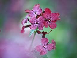 الورد جماله ينحني