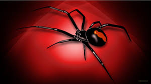 wallpapers of halloween wallpaper of spider