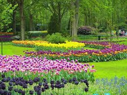 colourful trip amsterdam keukenhof gardens
