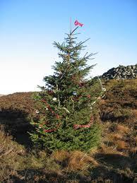Christmas tree © Susan McGinty :: Geograph Britain and Ireland - 139933_bf4ae418