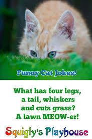 read our collection of funny jokes riddles and knock knock jokes