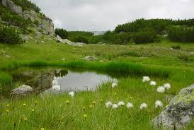 The Meadow Images?q=tbn:ANd9GcRZVYAXc6brnsH3_EBlcphvaTo5QPQnjBMUb3lqQel7Tq1REFoicQ